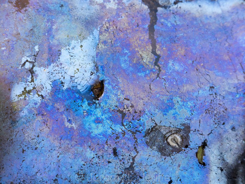 Maui Pond Scum (2 of 6).jpg