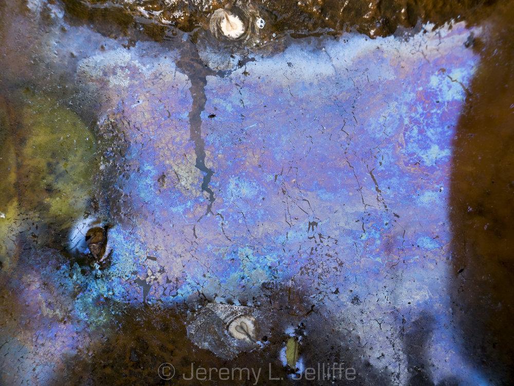 Maui Pond Scum (1 of 6).jpg