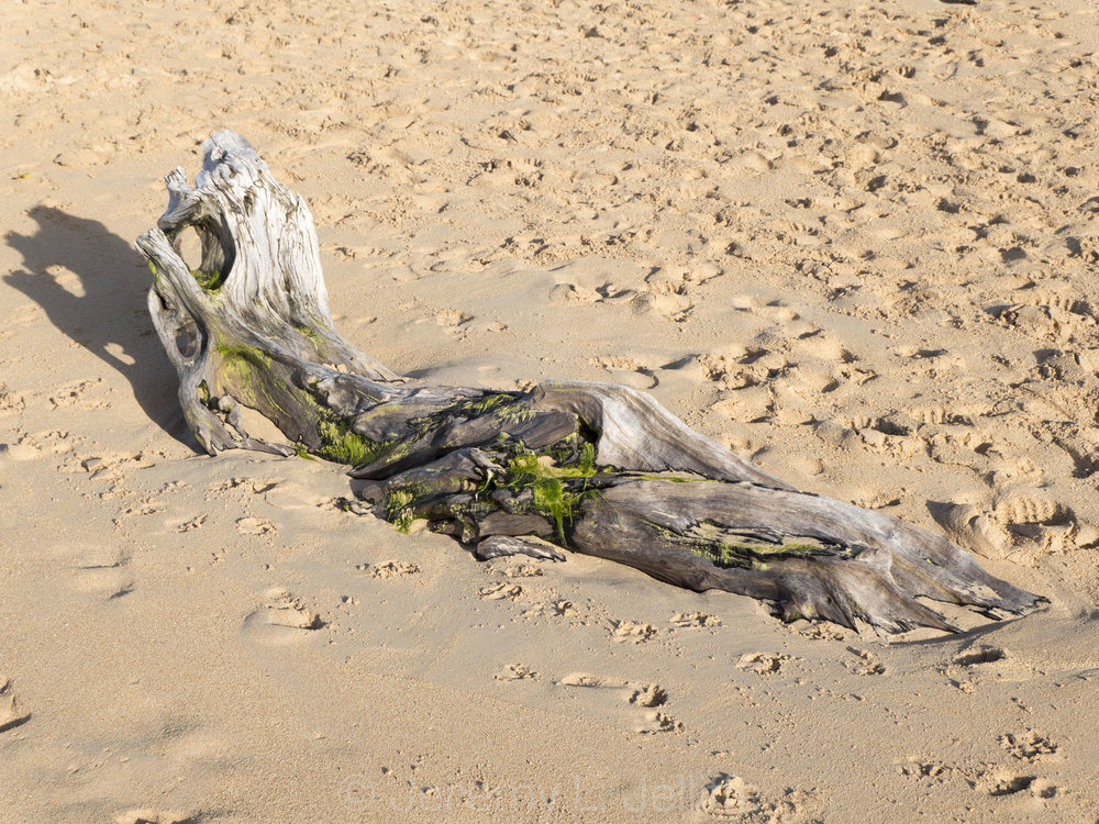 baldwin driftwood (1 of 10).jpg