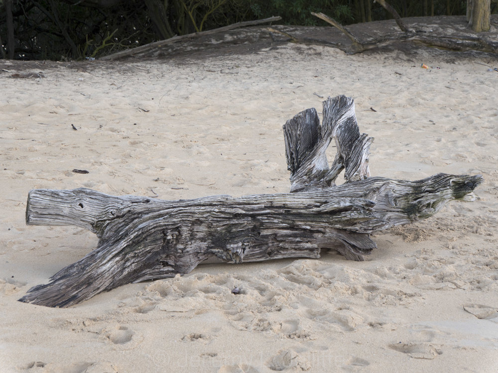 baldwin driftwood (5 of 10).jpg