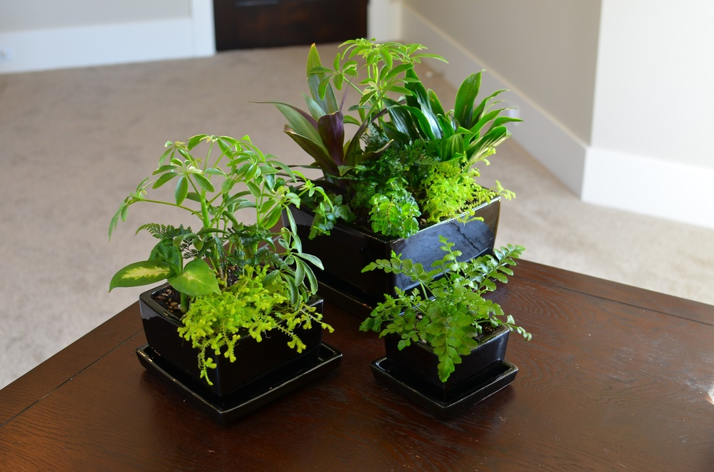 Desk Pots - Indoor Inspirations