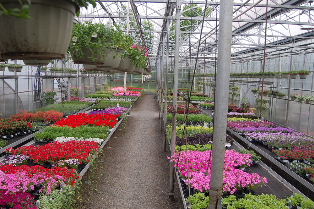 Morris Location - Greenhouse