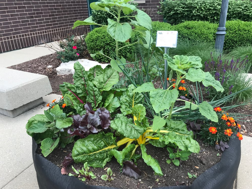 Display Patch - Bright Lights Swiss chardDetroit Red BeetsPurple Romagna ArtichokeRed ShisoItalian Bay LeafSunflowersMexican Torch SunflowerEgyptian Walking OnionMarigoldsFairy Tale Eggplant