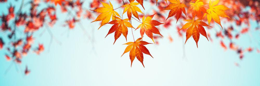 AutumnBanner.jpeg
