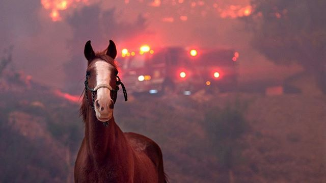 We are completely shattered by these fires. Please donate to @animalhopeandwellness. They've saved over 300 animals thus far.