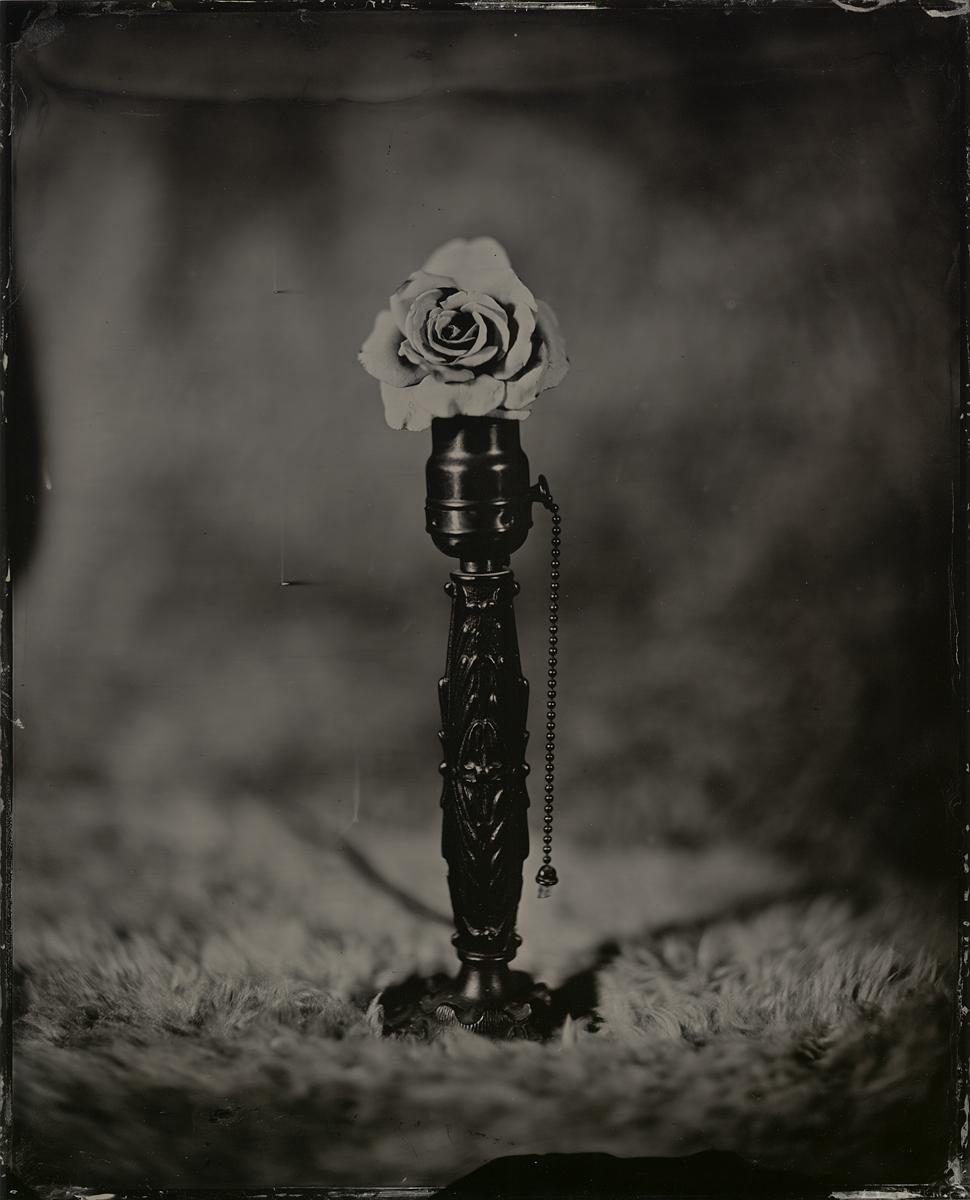Rose-Strobe-6-web.jpg