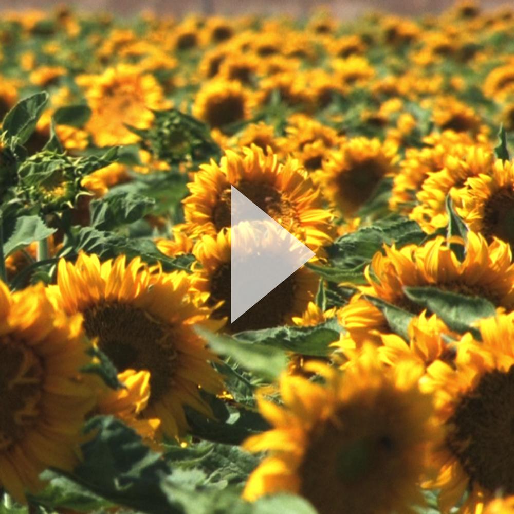 video-C.jpg