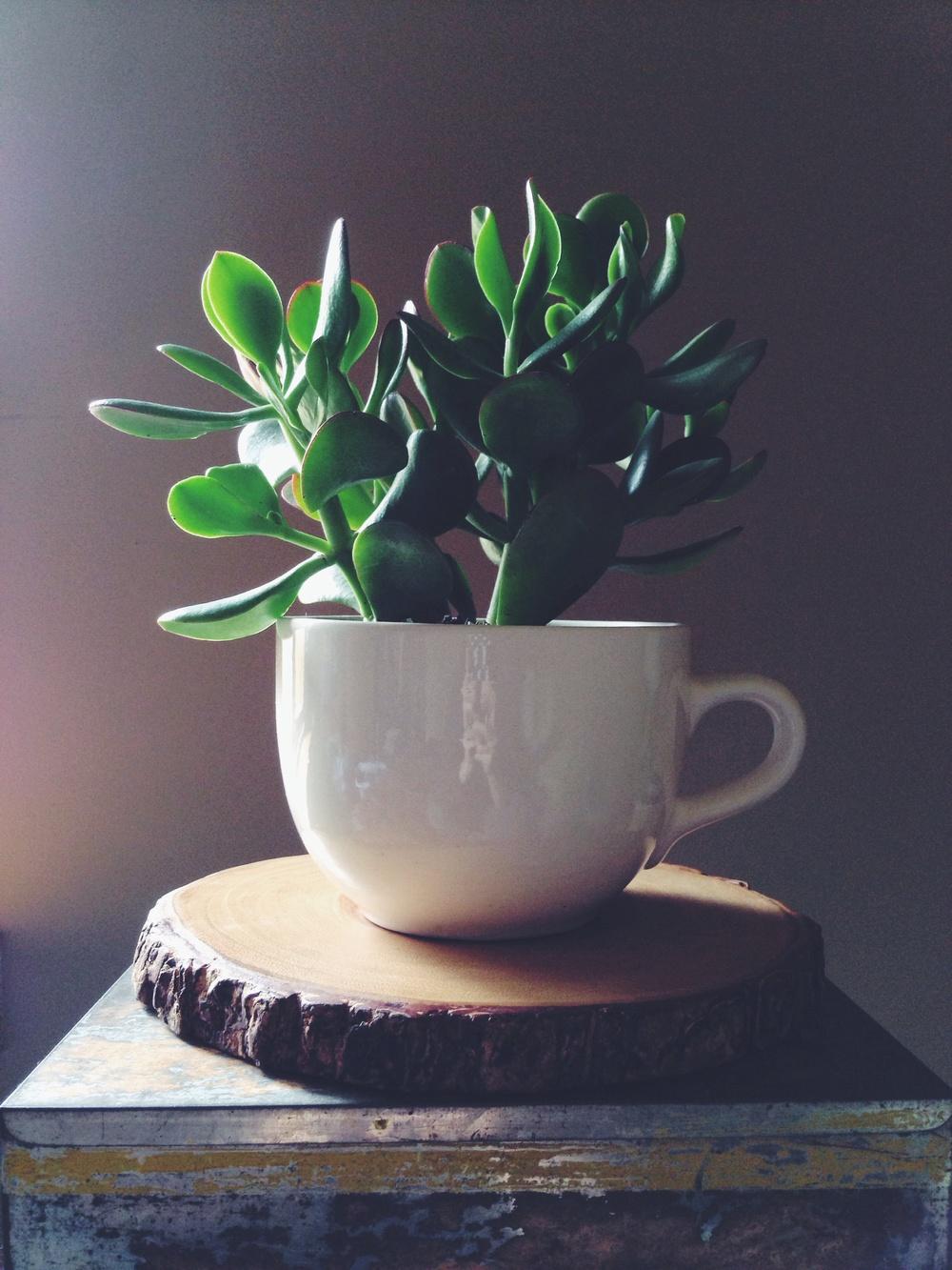 Mmmmm some succulent green tea.