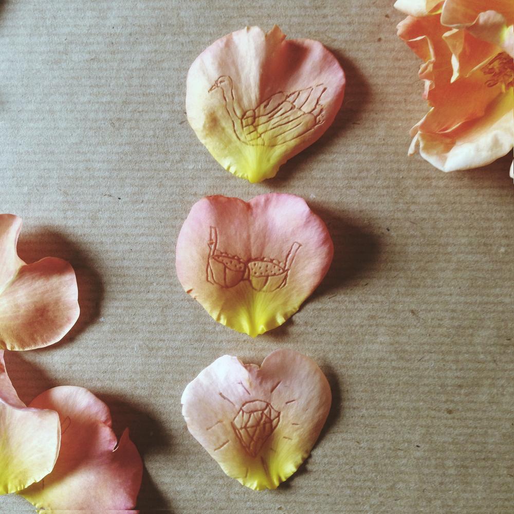 rose petals tara galuska