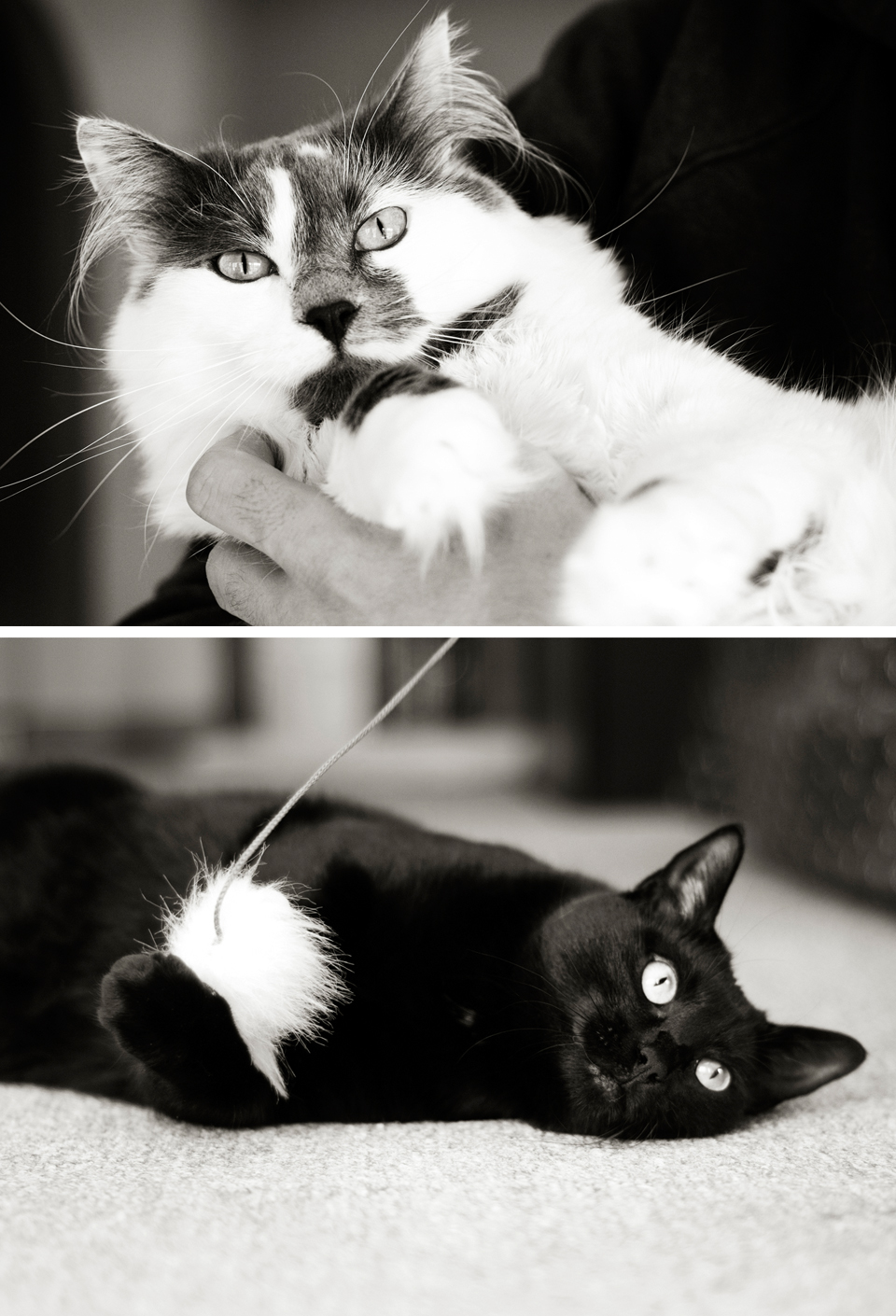 Recognize these two beauties? Yes that is right, Julie is my cats official photographer! -Tara