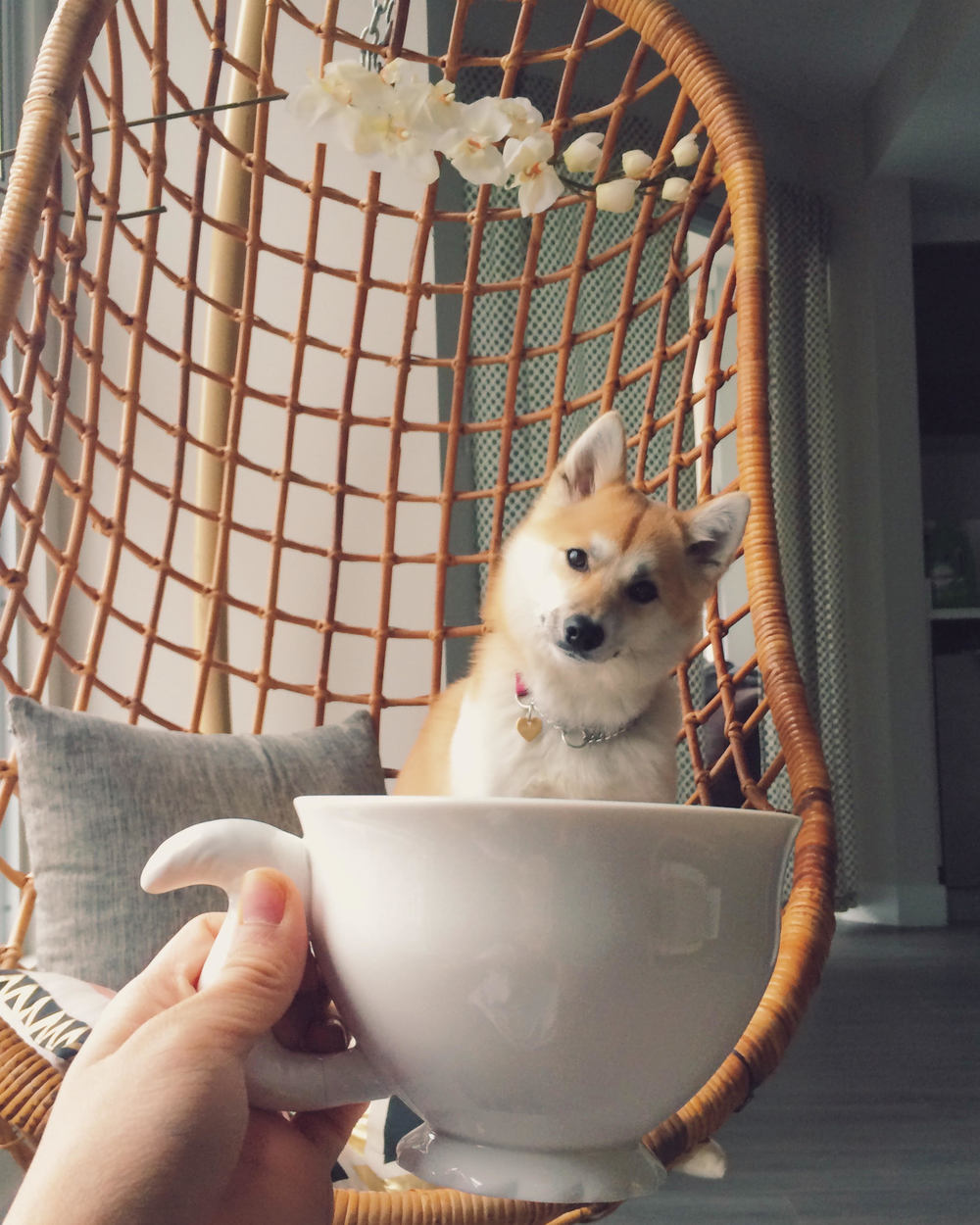 Mug of Margot! So cute :)