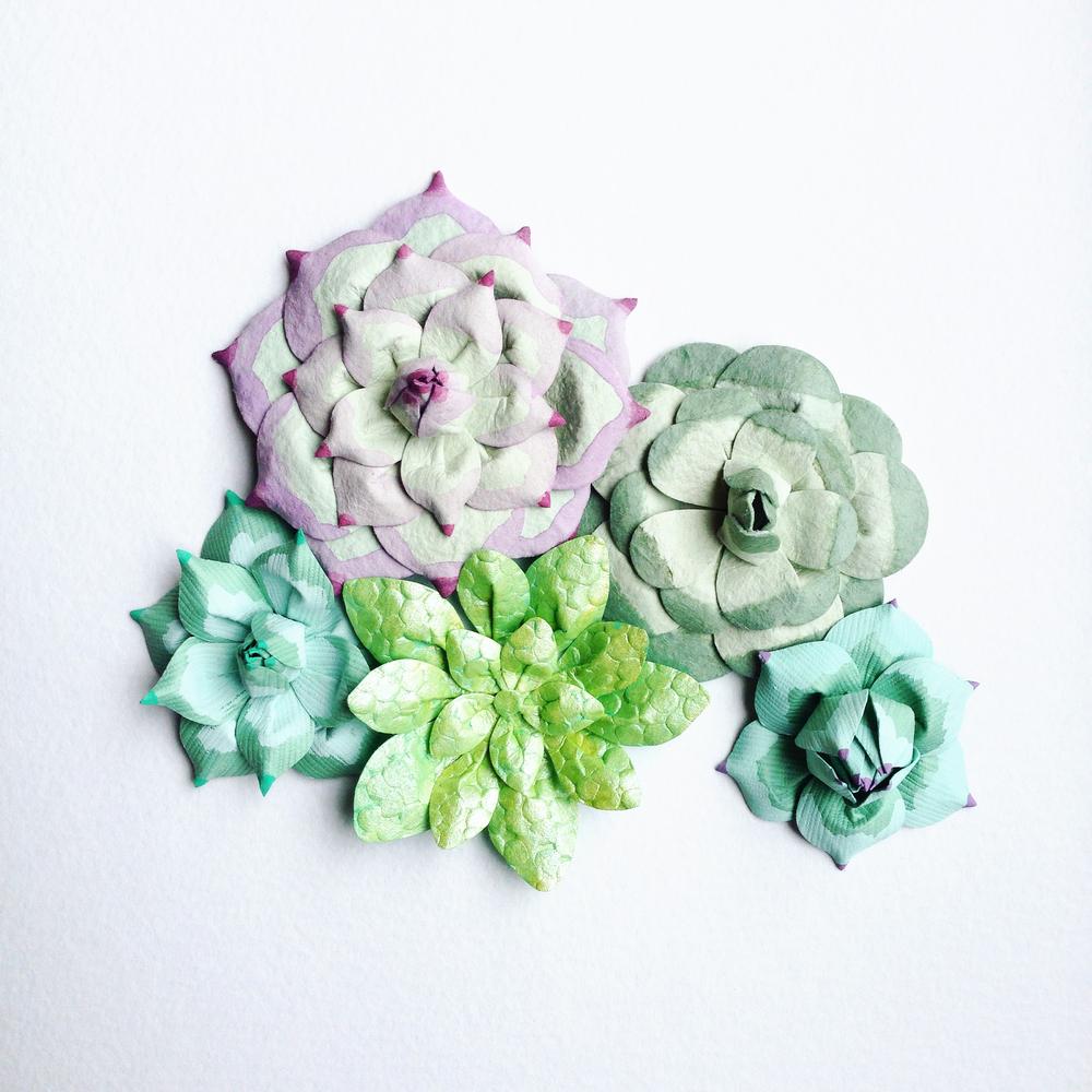 Paper Succulents Tara Galuska.JPG