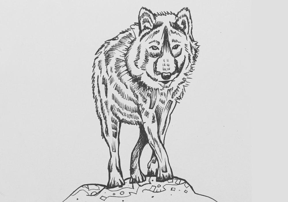 Wolf_wide.JPG