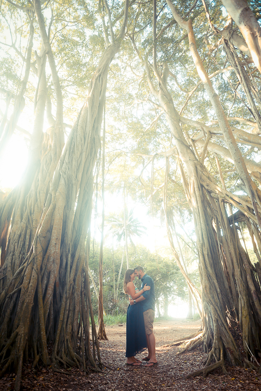 Engaged under a Banyan Tree, Hawaii, 2015