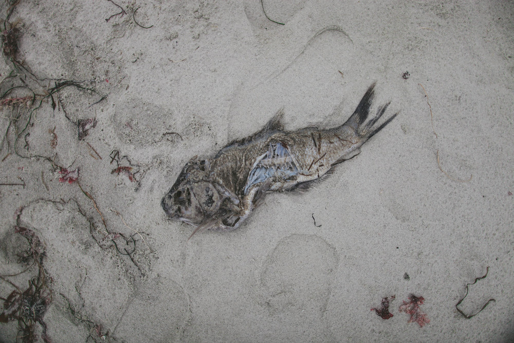 Pebble-Beach-5.jpg