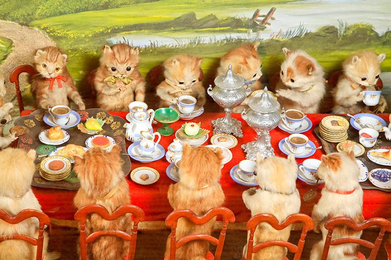 3029798-inline-49-kittens-tea-3.jpg