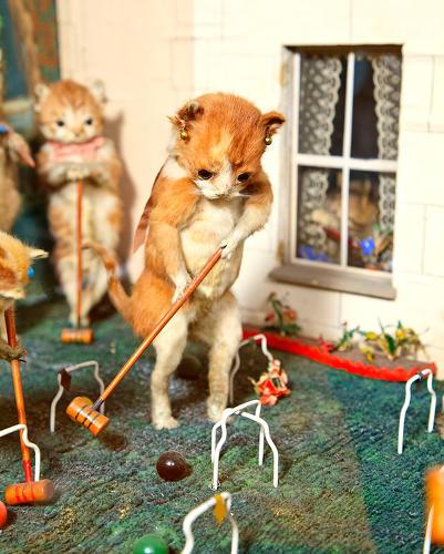 3029798-slide-52-kitten-playing-croquet.jpg