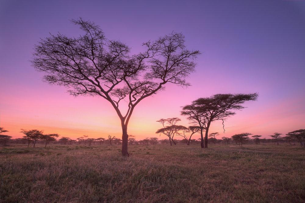 Ndutu, Tanzania.
