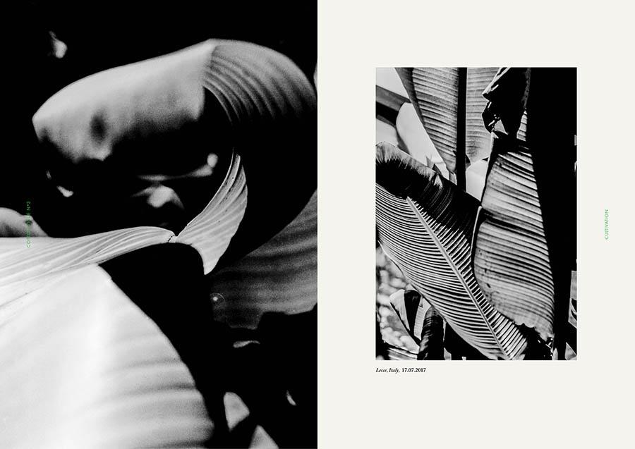 01_Cotton_Issue3_vianca.jpg