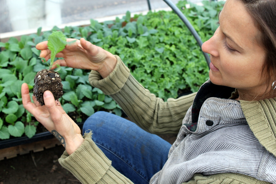 Michelle starts plants in soil blocks, which reduces the need for plastic pots, and helps the roots grow stronger.