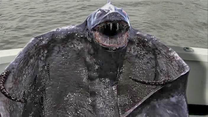 Give sea-vampire a hug! He's so friendly!