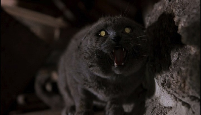 The cat. Also the scariest part of the movie. Also realistic to how cat's treat me when I'm nice to them.