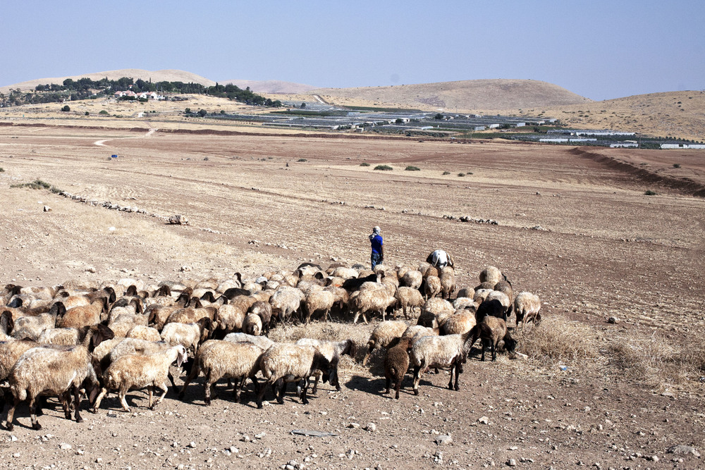 A Palestinian shepherd looking at a Israeli settlement that controls the water supply, in the district of Tubas.