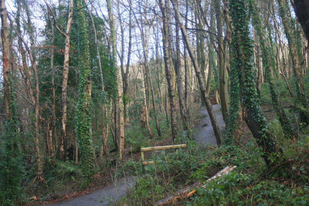 The famous Irish greenery at our local country park - Redburn