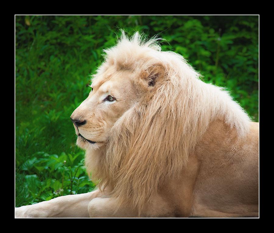 zoo-8314.jpg