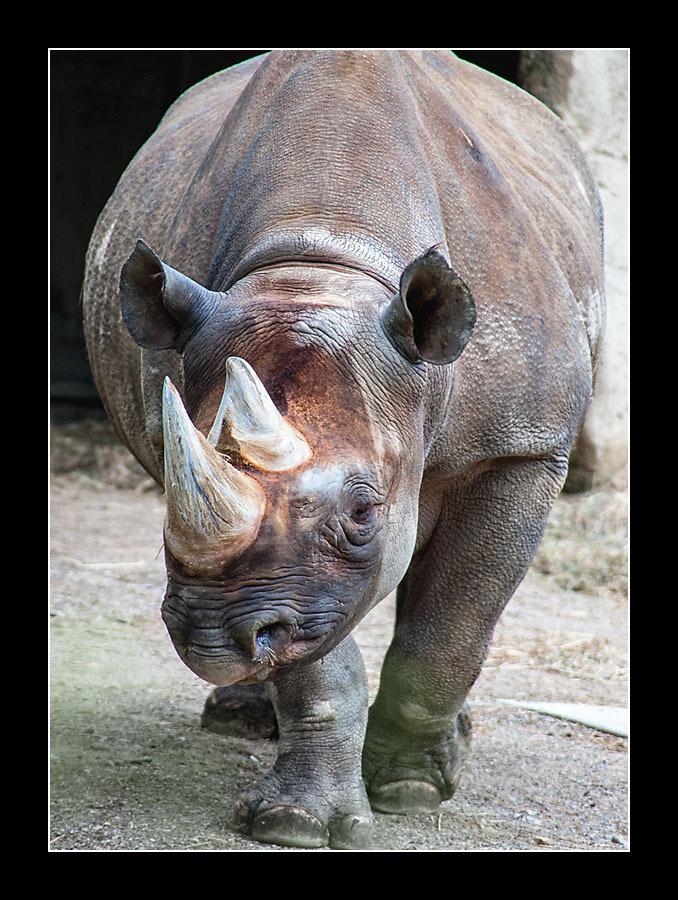 zoo-8121.jpg