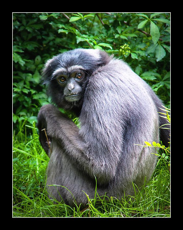 zoo-8350.jpg