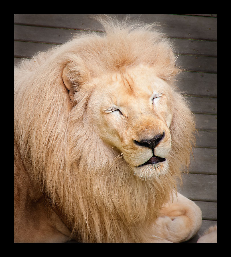 zoo-8318.jpg