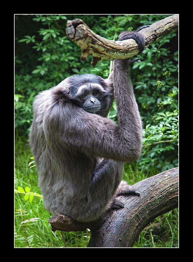 zoo-8351.jpg