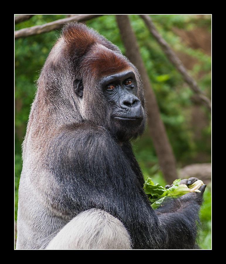 zoo-8026.jpg