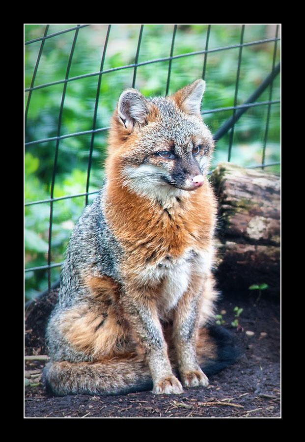 zoo-8369.jpg