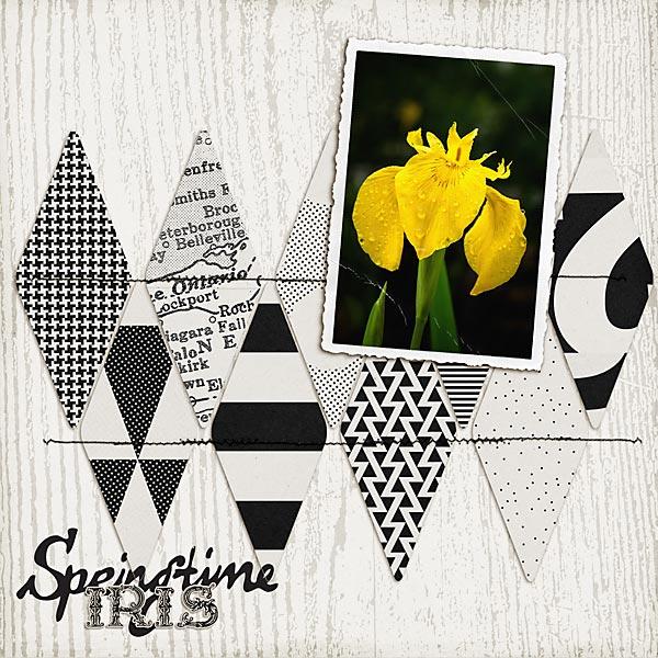 springtimeiris-copy.jpg