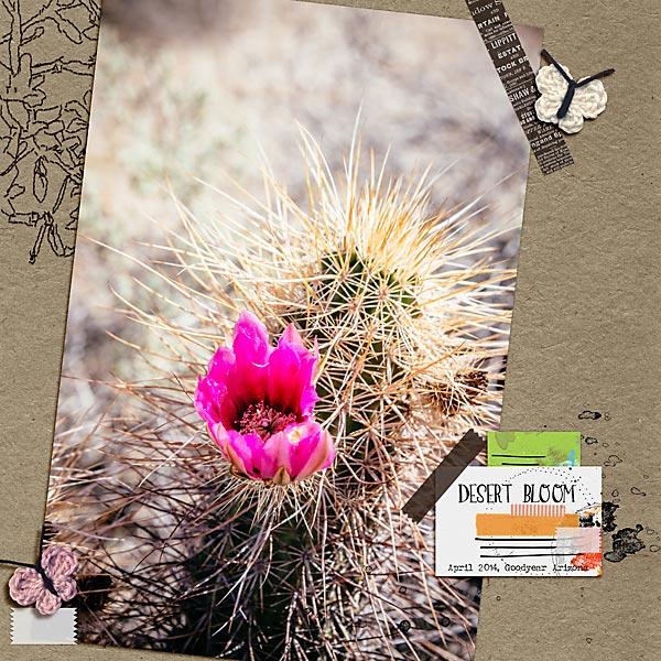 Desert-bloom-copy.jpg