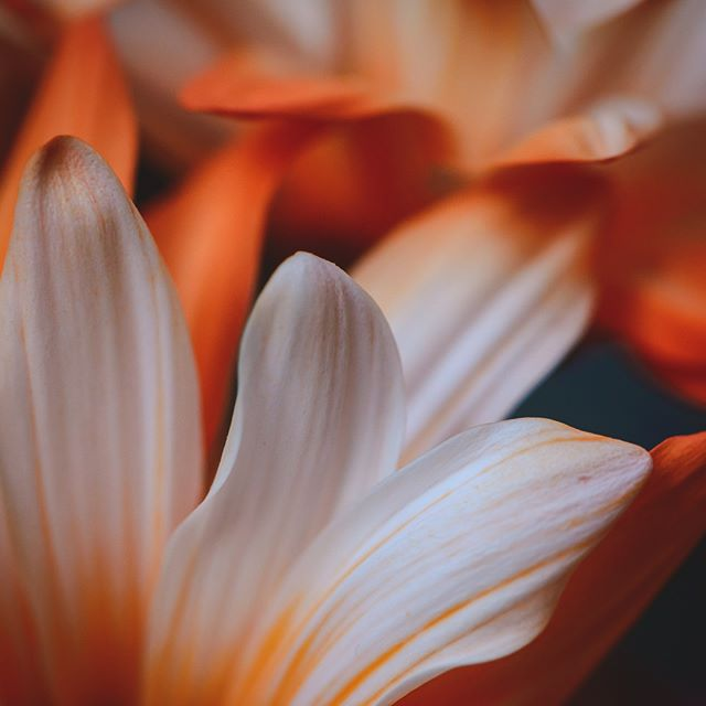 241/365 Delicate #project365 #floral #nature #cm_macro