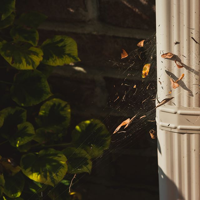 245/365 Littered home #project365  #nature #spiderweb