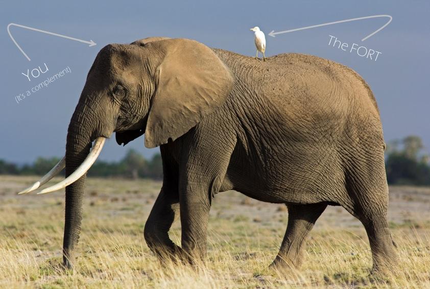 elephant and egret