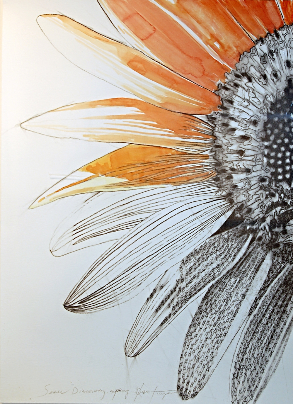 Dalvis Tuya, Discovery Series #3 (Flower), Charcoal and Watercolour on Paper, 2014, 45 x 61 cm