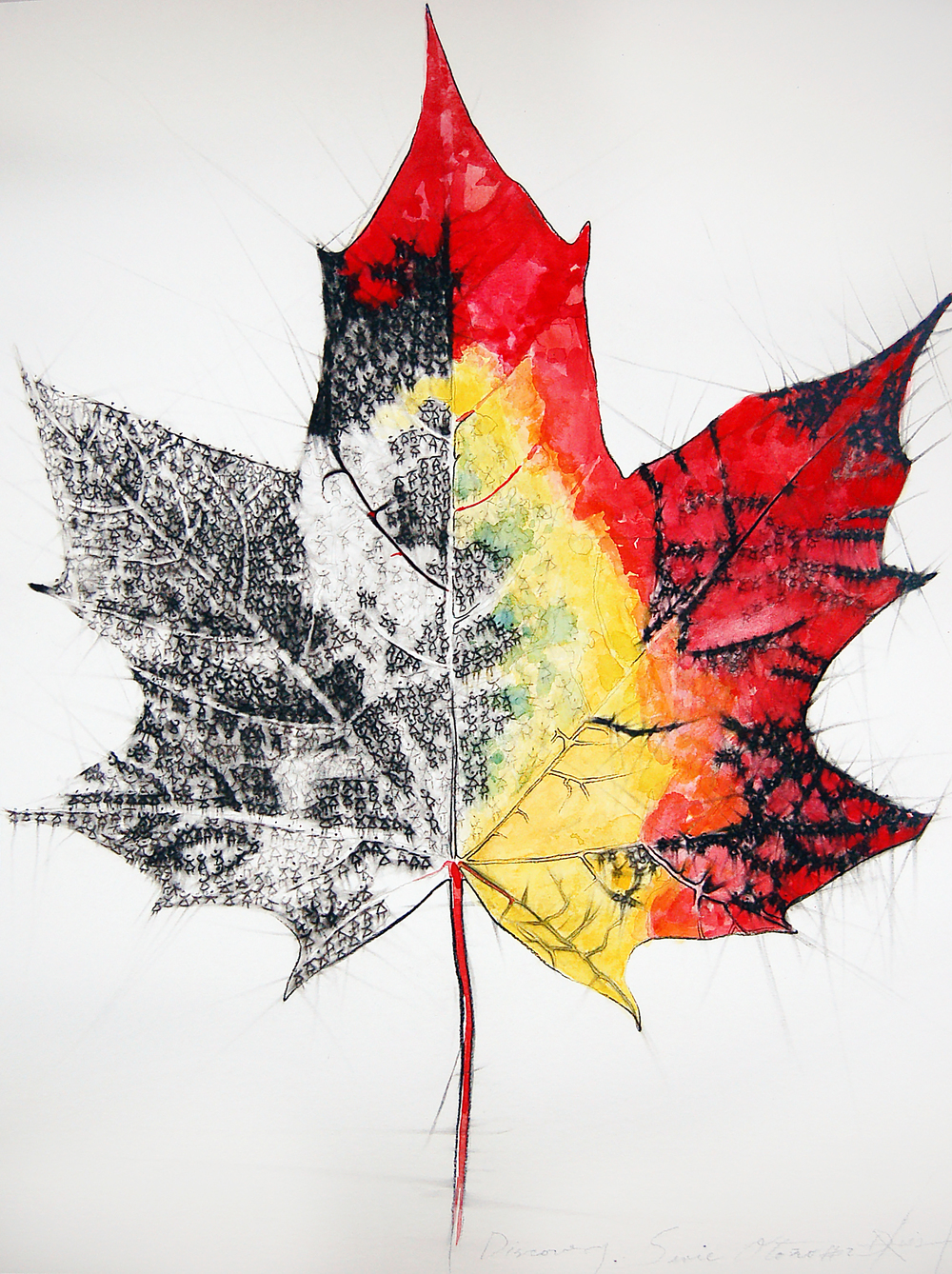 Discovery Series #2 (Maple Leaf), Charcoal and Watercolour on Paper, 45cm x 61cm