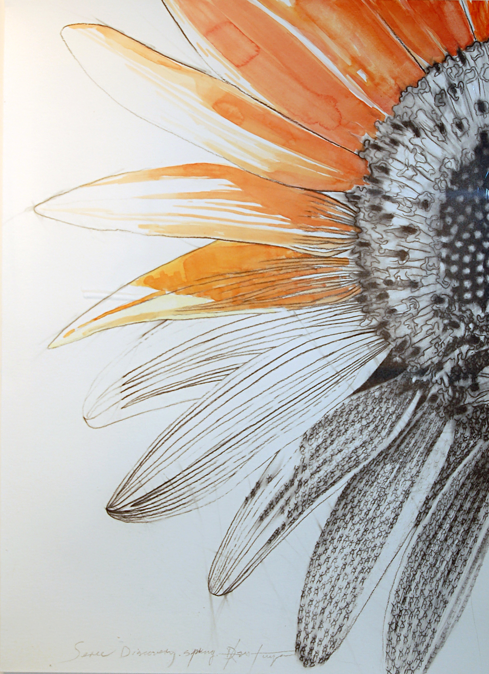 Discovery Series #3 (Flower), Charcoal and Watercolour on Paper, 2014, 45cm x 61cm
