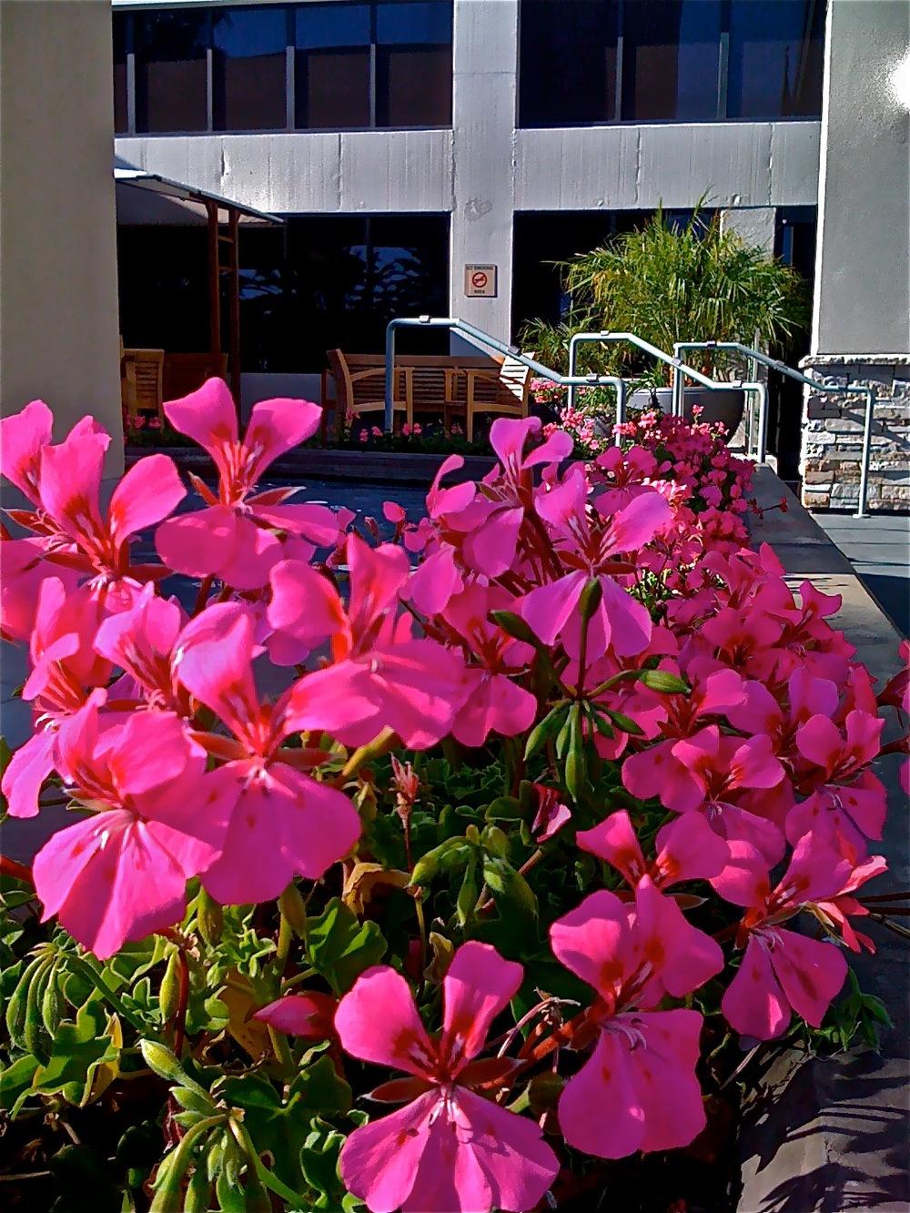 Saddleback Hospital, Mission Viejo, CA