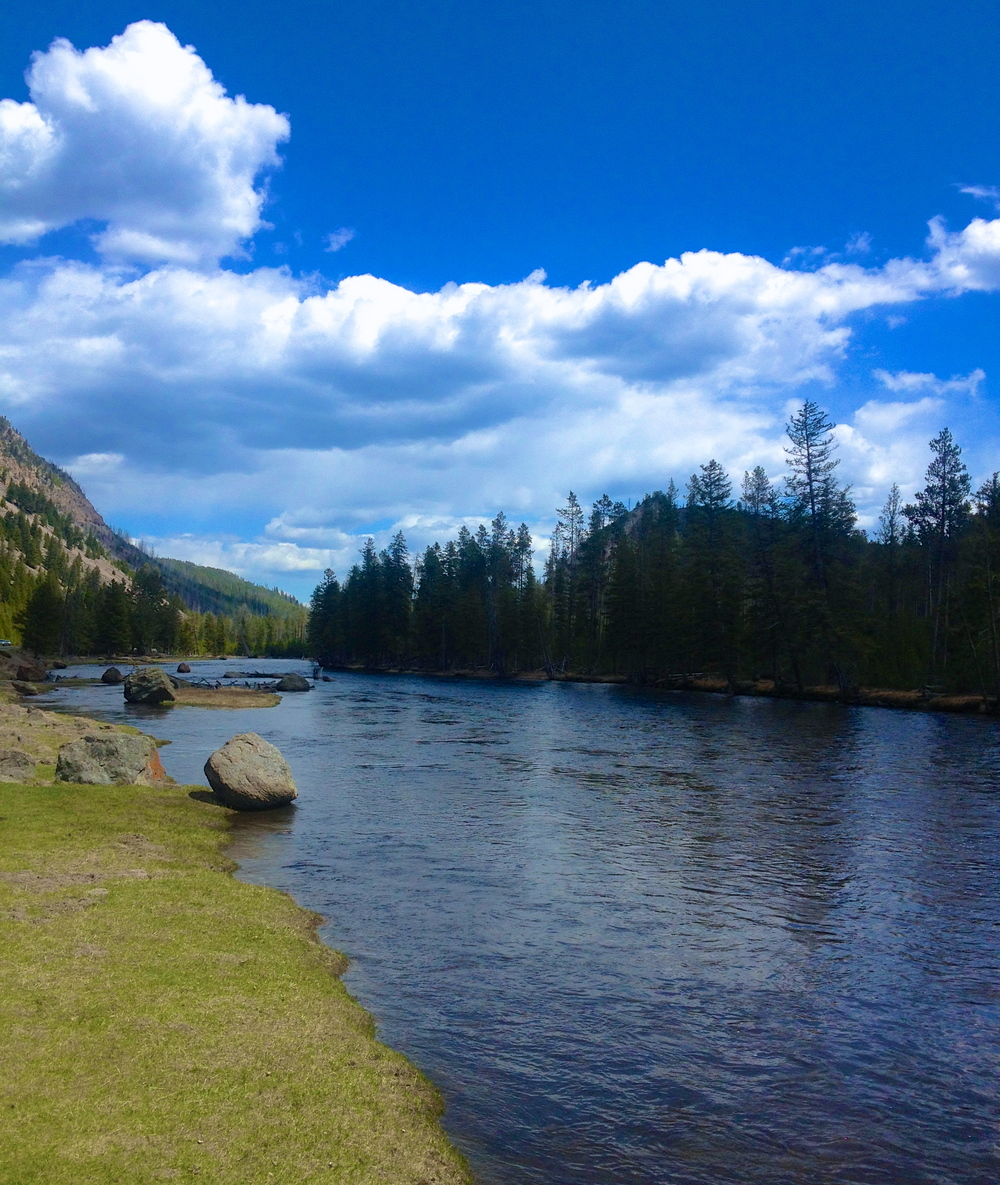 Madison River, Yellowstone National Park