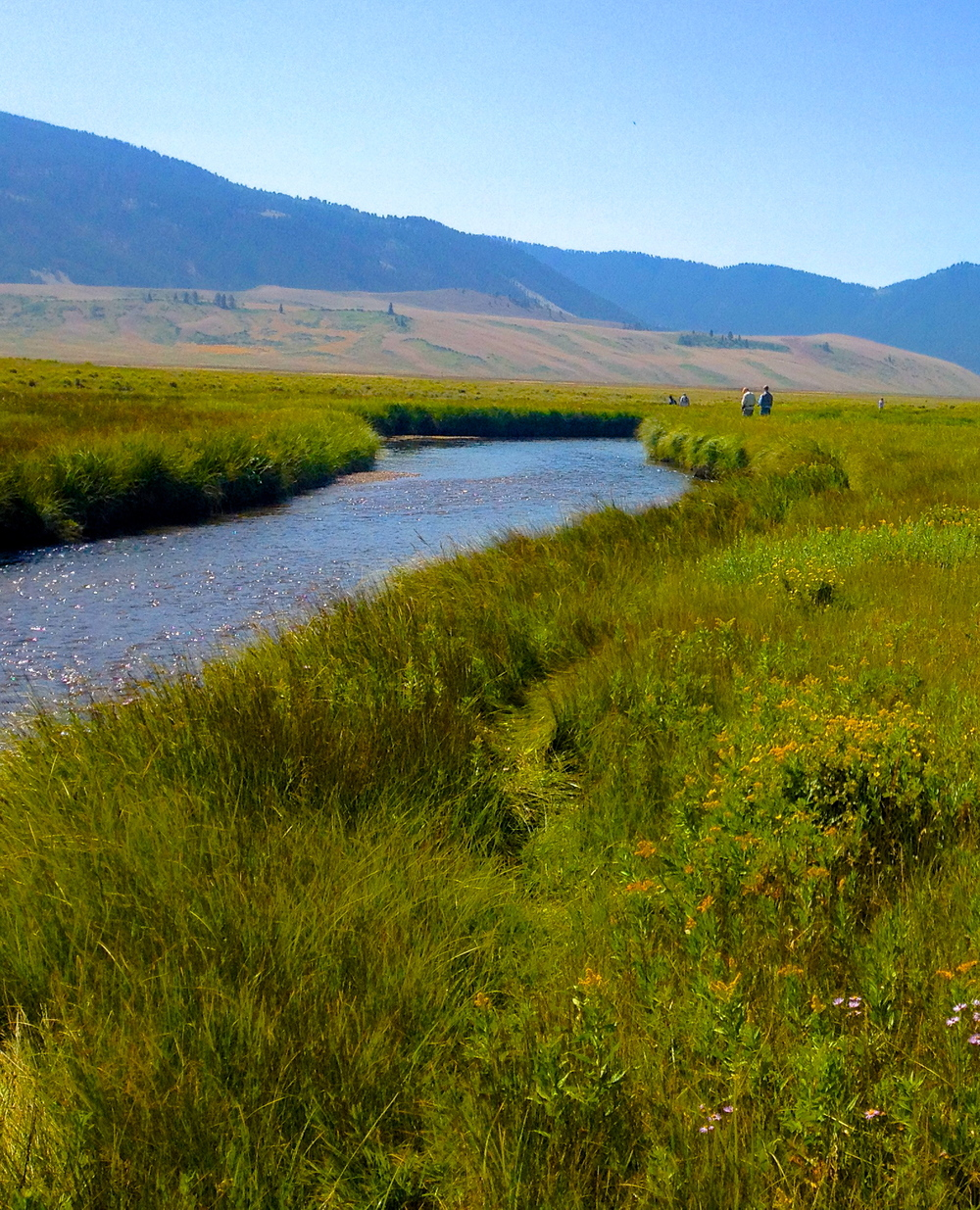Flat Creek, National Elk Reserve, Jackson, WY