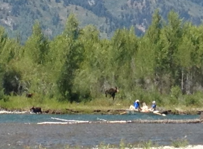 Mama Moose with two babies