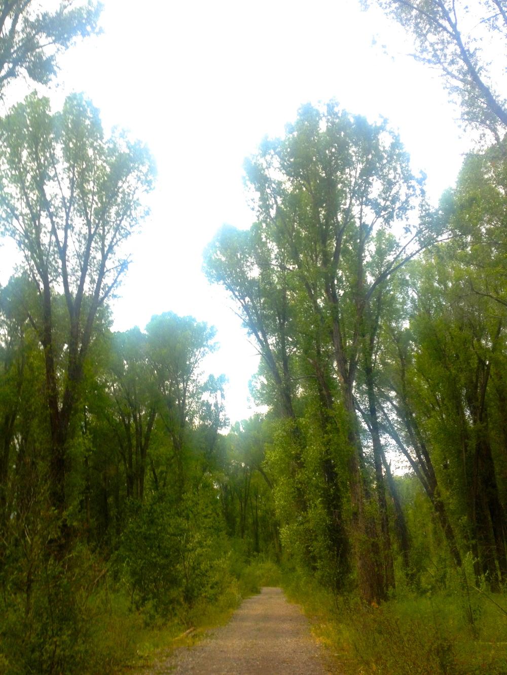 South Park Levee Trail, Jackson, WY