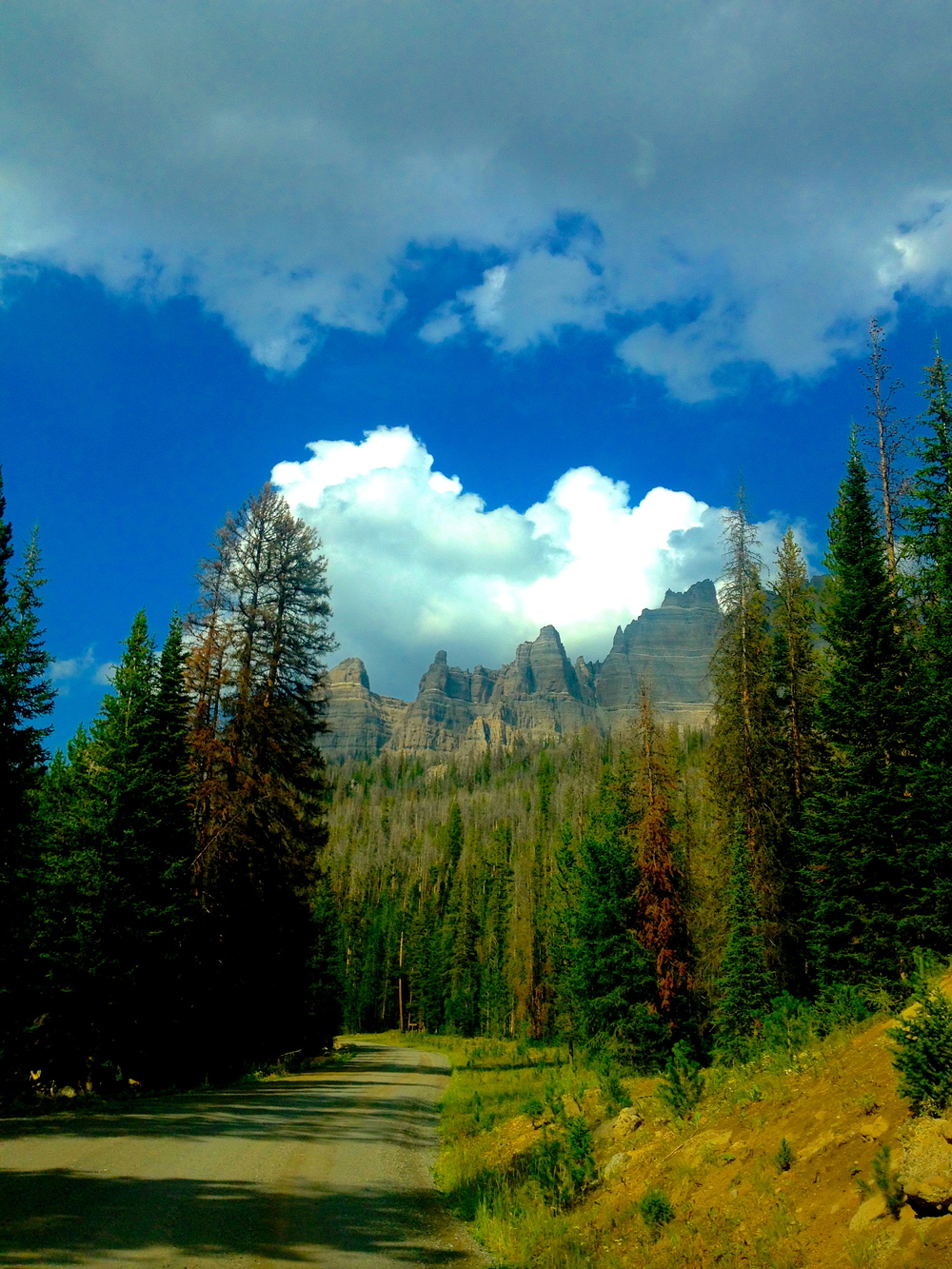 Road to Brooks Lake, Teton Wilderness