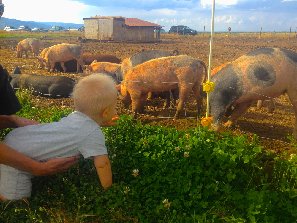 Mom, pleaaassssse let me play with the pigs